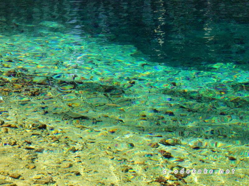 弁天池の湧き水