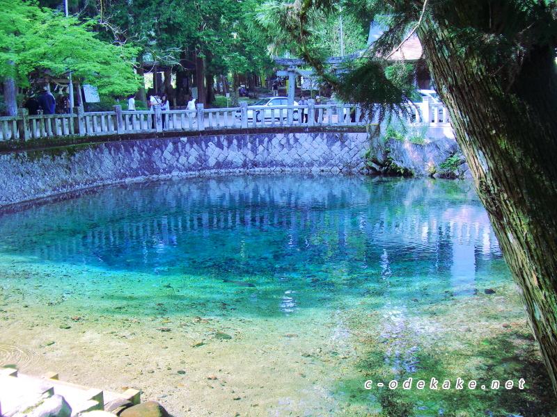 別府弁天池のコバルトブルーの湧き水