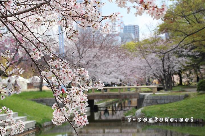 元安川の桜並木