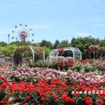 蜂ヶ峯総合公園のバラ園