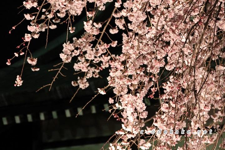 闇夜に浮かび上がるしだれ桜