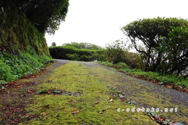 三隅梅林公園の入り口への坂道