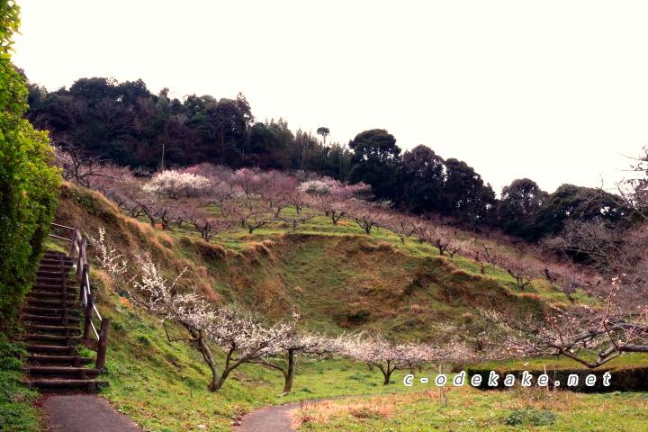 三隅梅林公園下の段