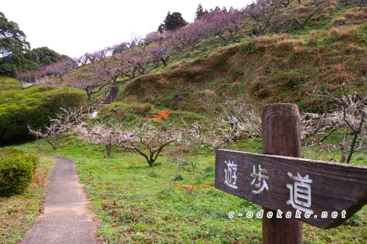 三隅梅林公園の遊歩道