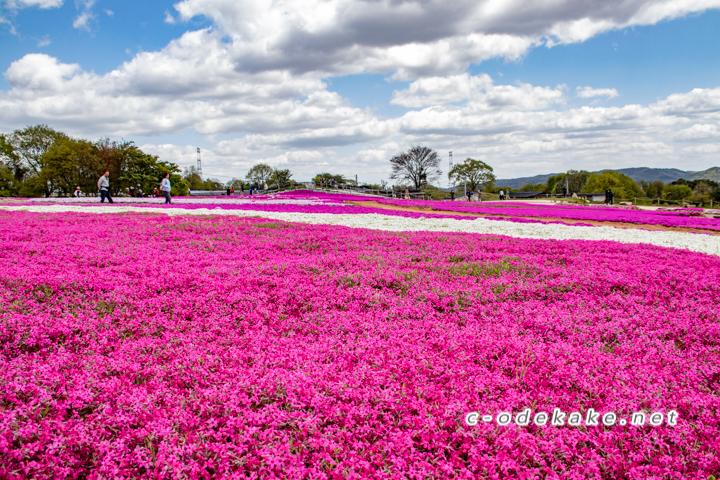 Flower Vilage 花夢の里