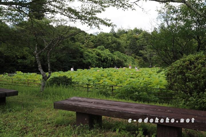 棲真寺のハス池の傍のベンチ