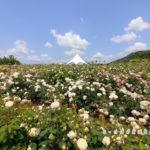 そらの花畑-世羅高原花の森