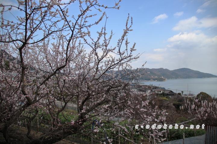 杏の木と海の広がる景色