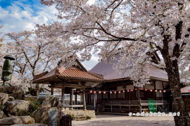 超専寺の桜